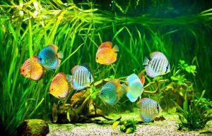 Comprar acuarios baratos online