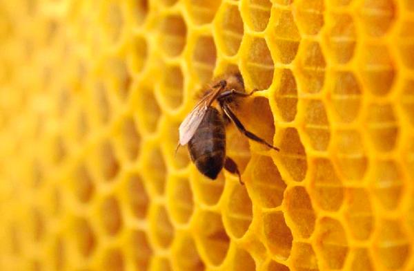 Cera de las abejas
