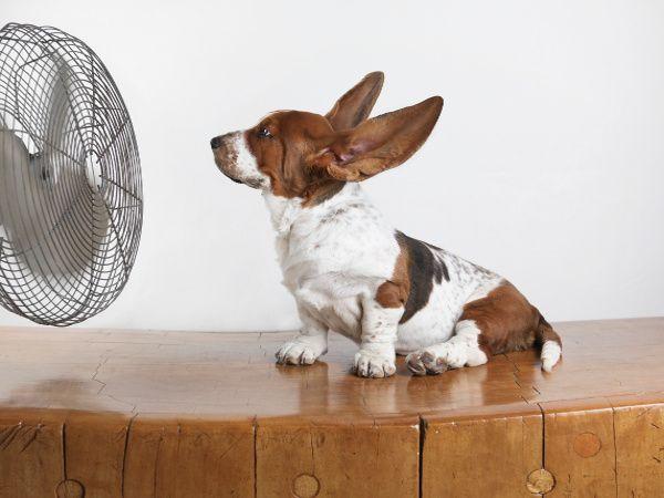 Ventilador silencioso económico con un perro