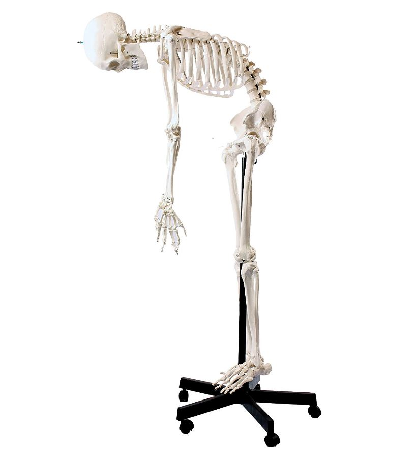 esqueleto humano tamaño real