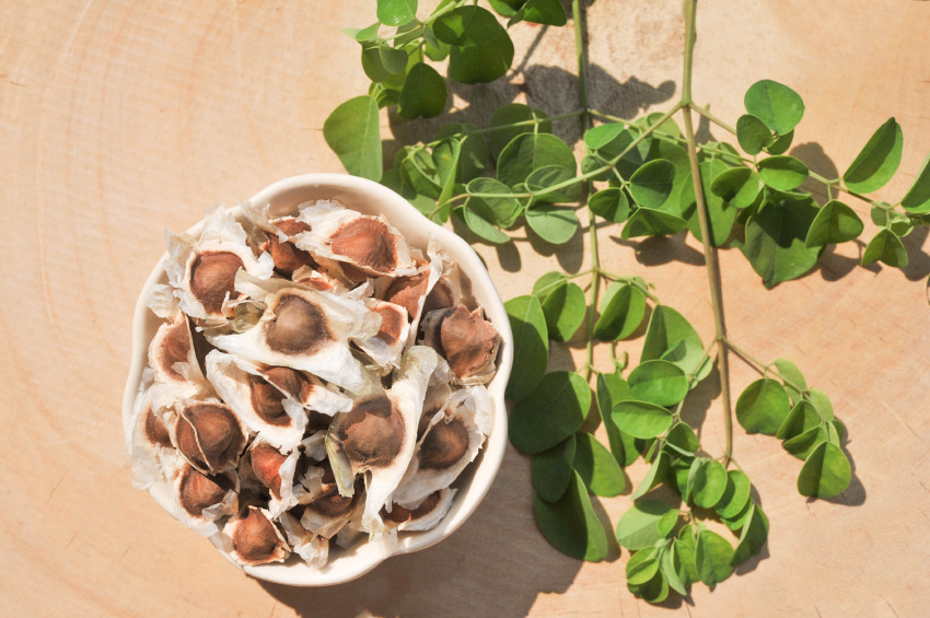 semillas de moringa al natural