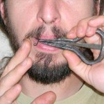 arpa de boca barata
