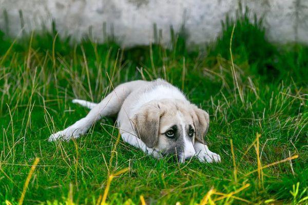 como funcionan los ahuyentadores para perros