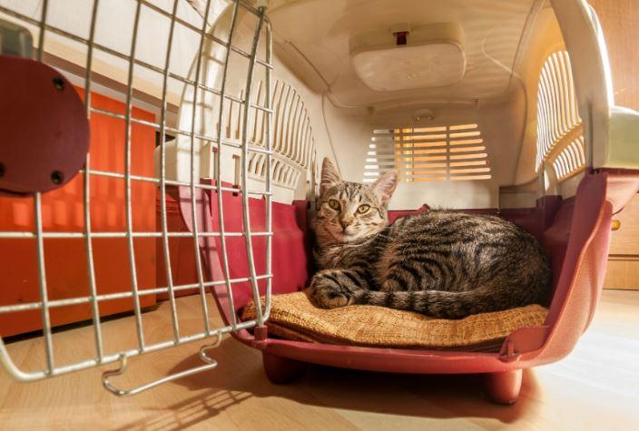 comprar transportin gatos economico