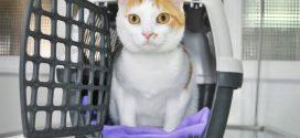 Dónde comprar un transportín para gatos barato